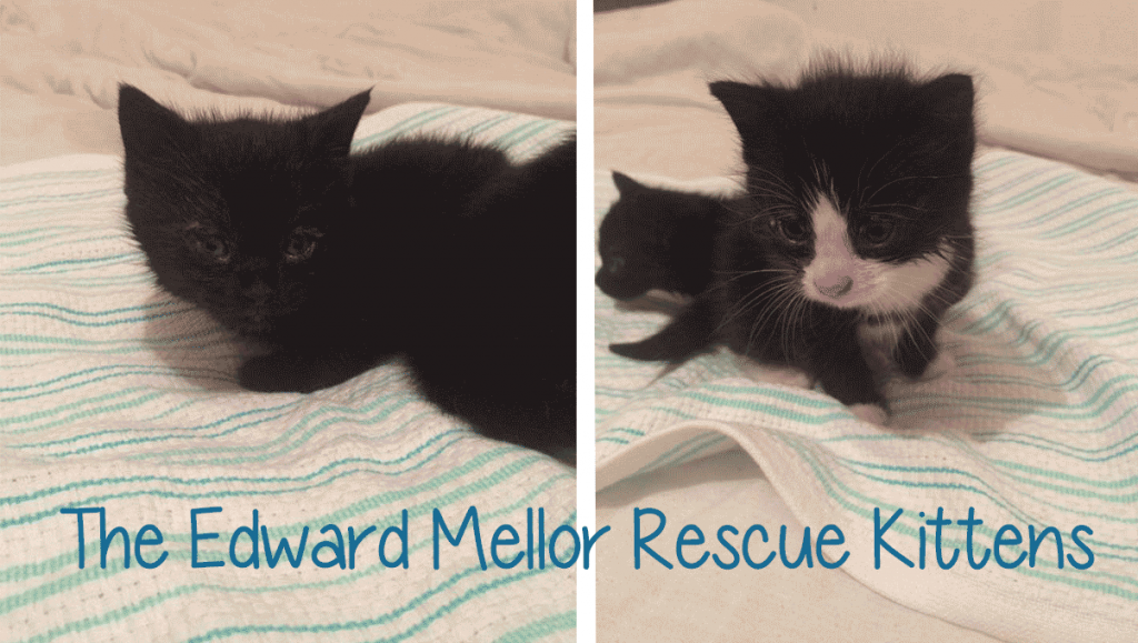 banner-rescue-kits