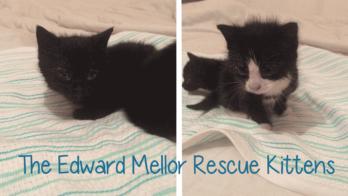 estate-agent-rescue-cats