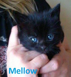mellow2