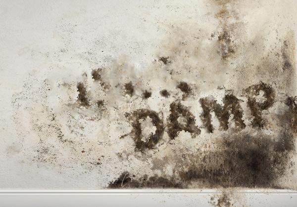 understanding-damp