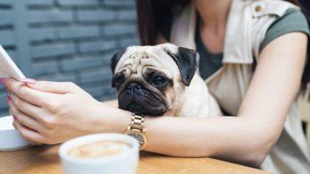 dog-cafe-denton