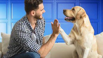 Rental demand for pet-friendly properties soaring